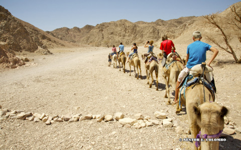 Southern Israel Camel Ride